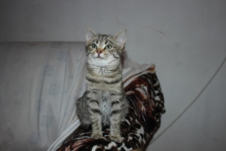 МОСКВА. Ищем семью для прекрасной леопардовой Маркизы.