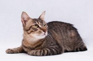 Москва. Полосатый кот Тишка в добрые руки