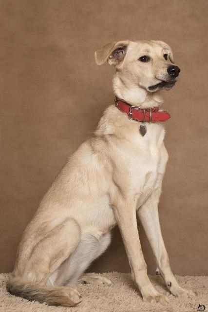 Очаровательная и задорная щенок-девочка Руся в дар. Москва и МО